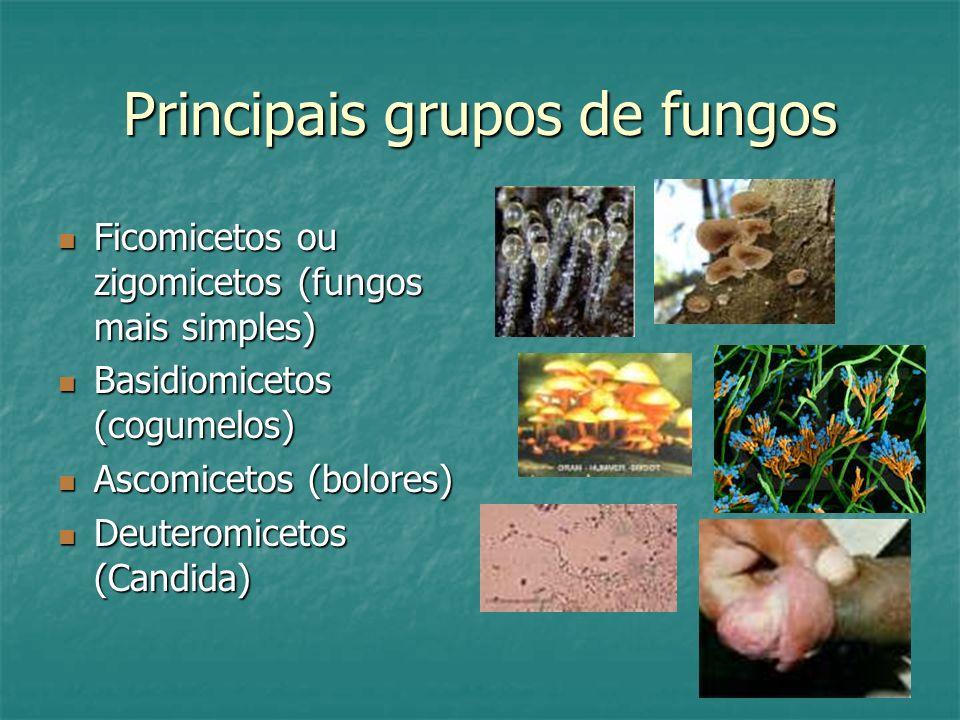 Principais grupos de fungos Ficomicetos ou zigomicetos (fungos mais simples) Ficomicetos ou zigomicetos (fungos mais simples) Basidiomicetos (cogumelos) Basidiomicetos (cogumelos) Ascomicetos (bolores) Ascomicetos (bolores) Deuteromicetos (Candida) Deuteromicetos (Candida)