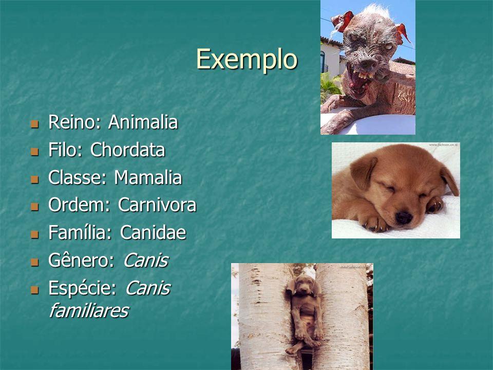 Exemplo Reino: Animalia Reino: Animalia Filo: Chordata Filo: Chordata Classe: Mamalia Classe: Mamalia Ordem: Carnivora Ordem: Carnivora Família: Canidae Família: Canidae Gênero: Canis Gênero: Canis Espécie: Canis familiares Espécie: Canis familiares
