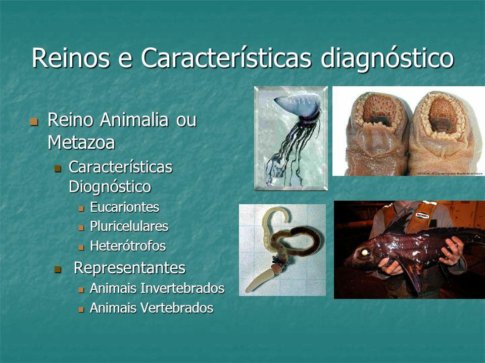 Reinos e Características diagnóstico Reino Animalia ou Metazoa Reino Animalia ou Metazoa Características Diognóstico Características Diognóstico Eucariontes Eucariontes Pluricelulares Pluricelulares Heterótrofos Heterótrofos Representantes Representantes Animais Invertebrados Animais Invertebrados Animais Vertebrados Animais Vertebrados