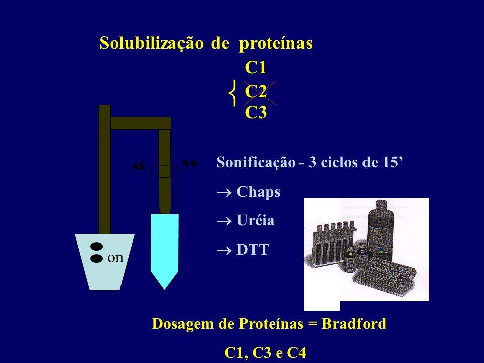 Solubilização de proteínas C1 C3 on Sonificação - 3 ciclos de 15 Chaps Uréia DTT Dosagem de Proteínas = Bradford C1, C3 e C4 C2
