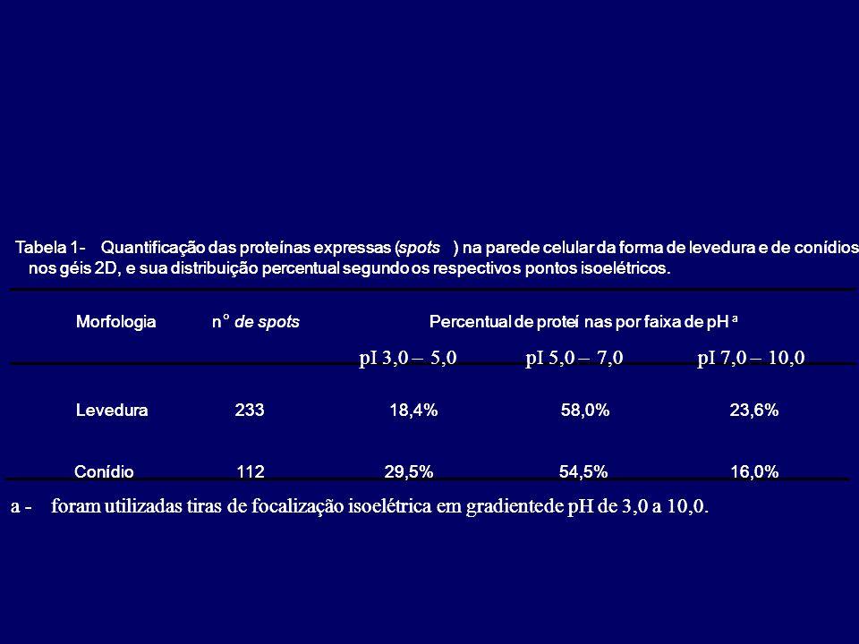 Morfologian de spotsPercentual de proteínas por faixa de pH a pI3,0–5,0pI5,0–7,0pI7,0–10,0 Levedura23318,4% 58,0%23,6% Conídio11229,5%54,5%16,0% Tabel