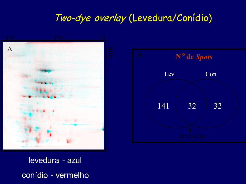 14132 N de Spots Lev Con 14132 N de Spots Lev Con A B Interseção 4,0 IPG 7,0 SDS Two-dye overlay (Levedura/Conídio) levedura - azul conídio - vermelho
