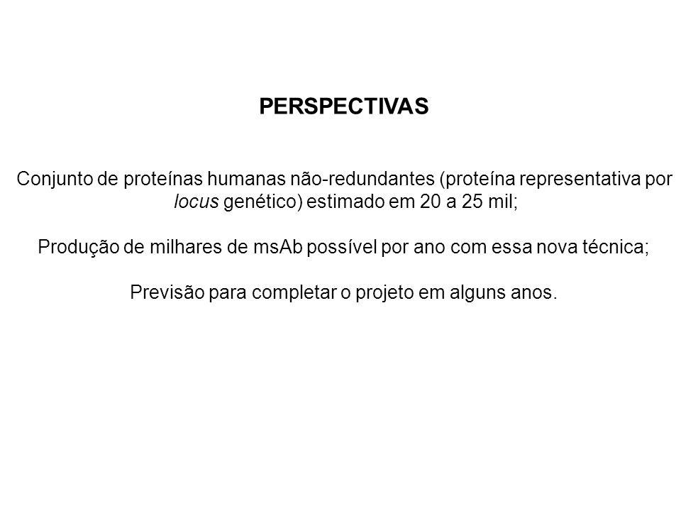 PERSPECTIVAS Conjunto de proteínas humanas não-redundantes (proteína representativa por locus genético) estimado em 20 a 25 mil; Produção de milhares