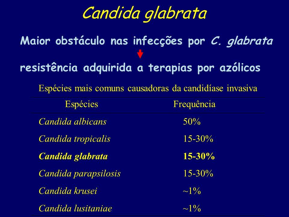 Candida glabrata Maior obstáculo nas infecções por C. glabrata resistência adquirida a terapias por azólicos Espécies mais comuns causadoras da candid