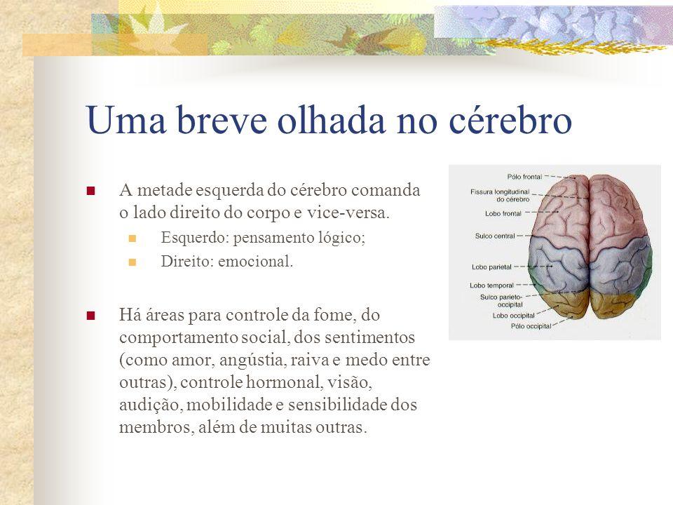 Uma breve olhada no cérebro A metade esquerda do cérebro comanda o lado direito do corpo e vice-versa. Esquerdo: pensamento lógico; Direito: emocional
