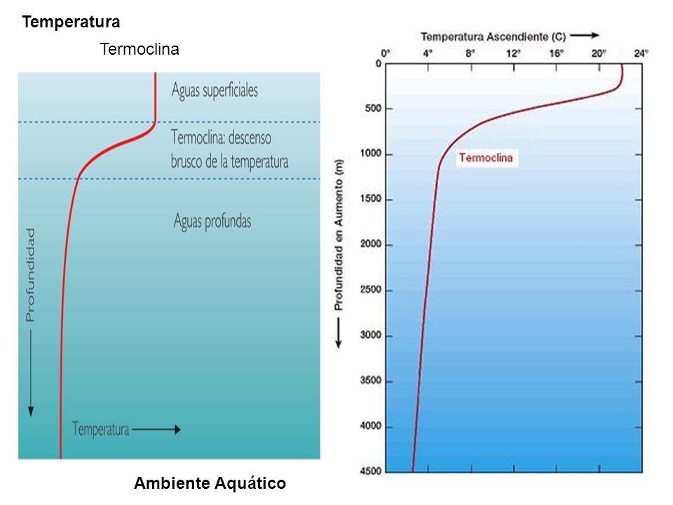 Temperatura Termoclina Ambiente Aquático
