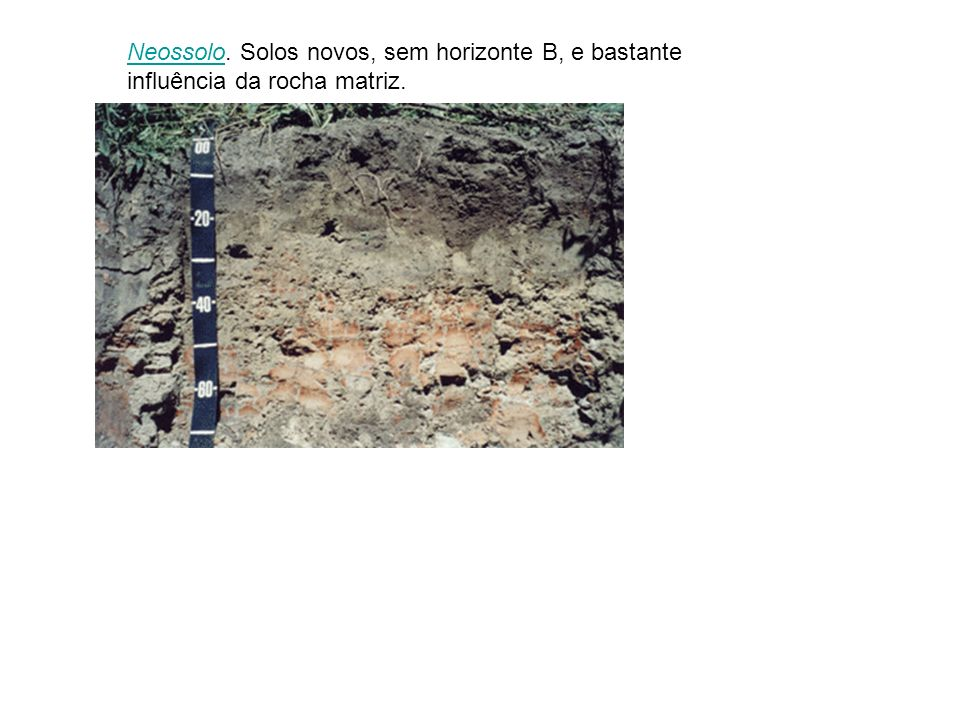 NeossoloNeossolo. Solos novos, sem horizonte B, e bastante influência da rocha matriz.
