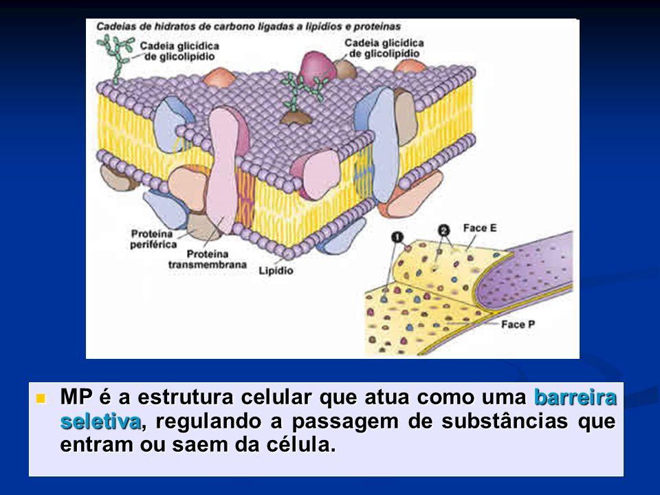 MP é a estrutura celular que atua como uma barreira seletiva, regulando a passagem de substâncias que entram ou saem da célula. MP é a estrutura celul