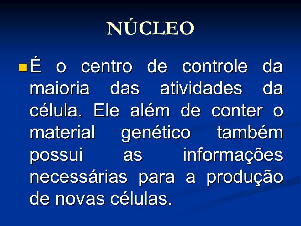 NÚCLEO É o centro de controle da maioria das atividades da célula. Ele além de conter o material genético também possui as informações necessárias par