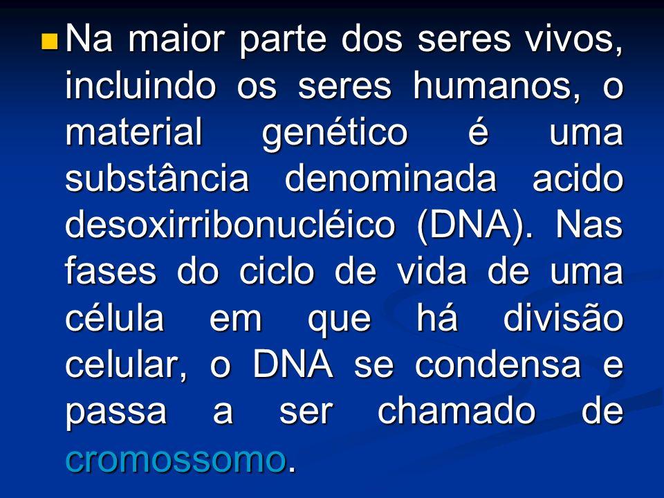 Na maior parte dos seres vivos, incluindo os seres humanos, o material genético é uma substância denominada acido desoxirribonucléico (DNA). Nas fases