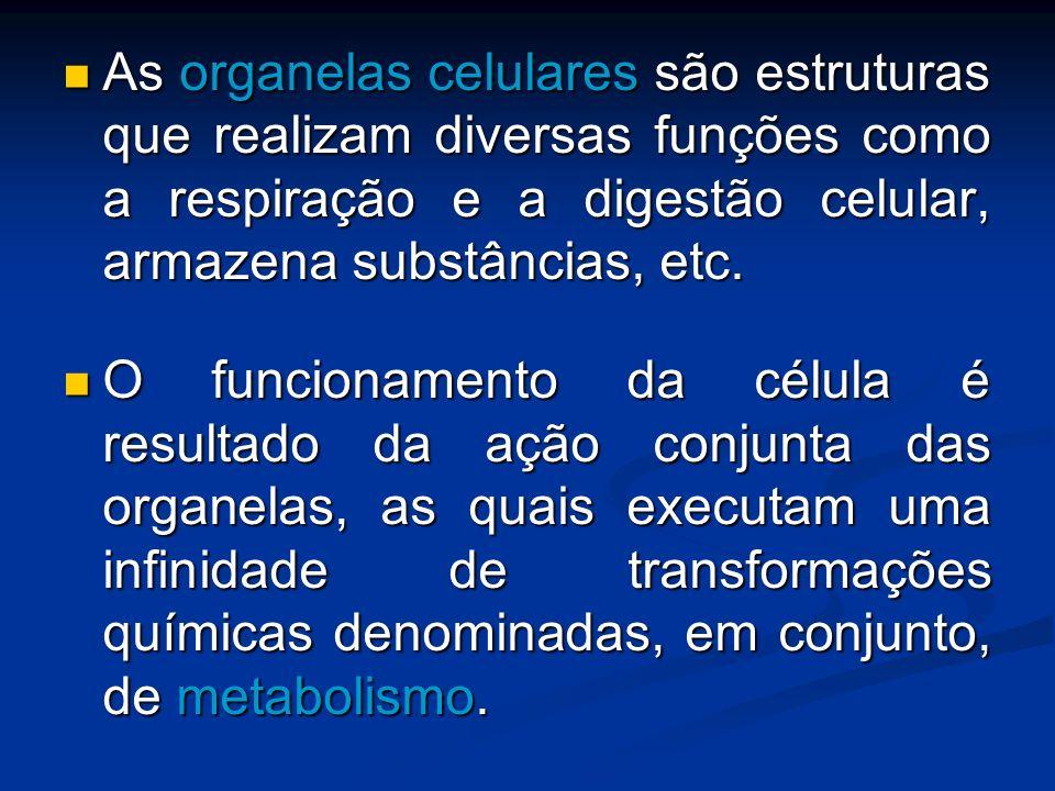 As organelas celulares são estruturas que realizam diversas funções como a respiração e a digestão celular, armazena substâncias, etc. As organelas ce
