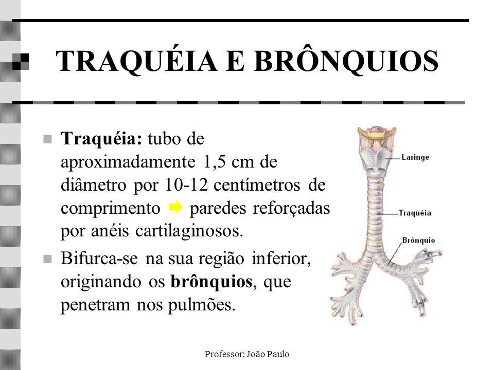 Professor: João Paulo TRAQUÉIA E BRÔNQUIOS Traquéia: tubo de aproximadamente 1,5 cm de diâmetro por 10-12 centímetros de comprimento paredes reforçada