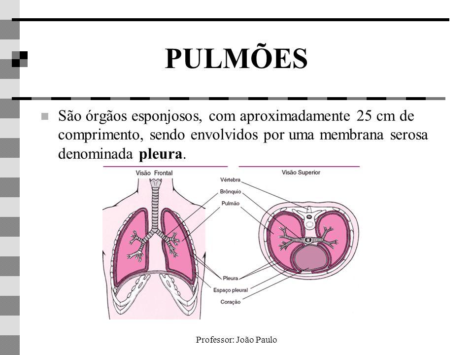 Professor: João Paulo PULMÕES São órgãos esponjosos, com aproximadamente 25 cm de comprimento, sendo envolvidos por uma membrana serosa denominada ple