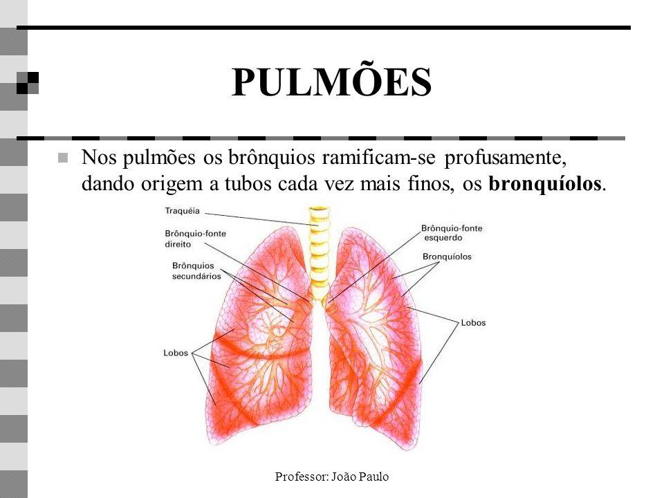 Professor: João Paulo PULMÕES Nos pulmões os brônquios ramificam-se profusamente, dando origem a tubos cada vez mais finos, os bronquíolos.