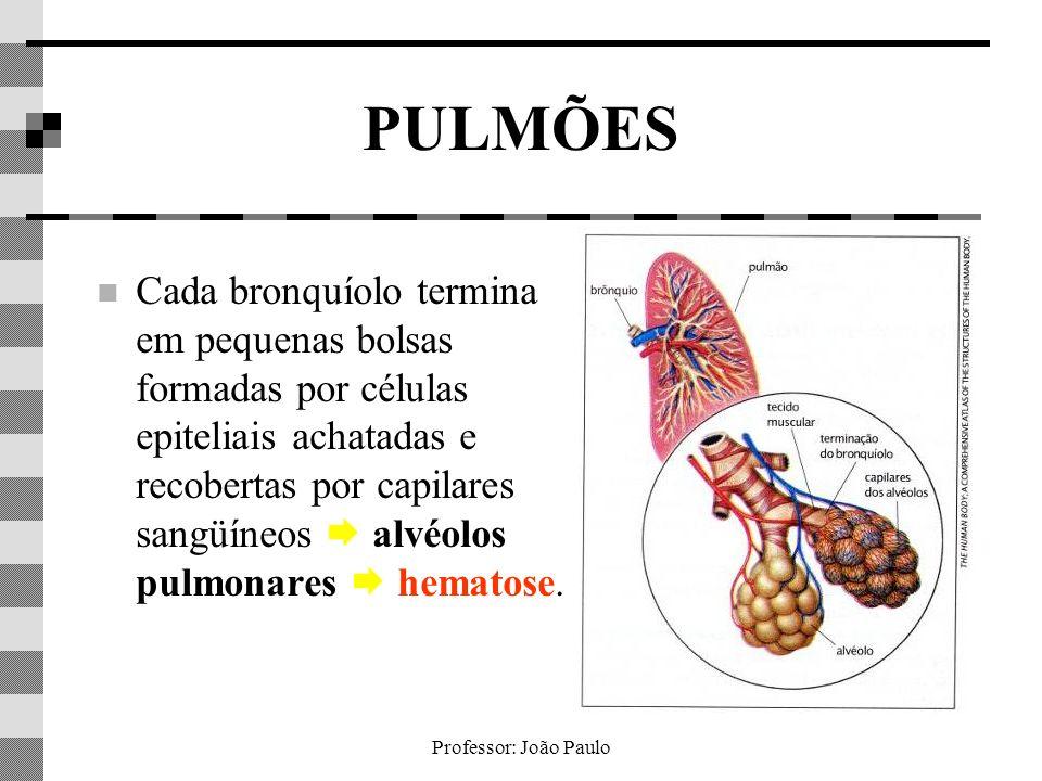 Professor: João Paulo PULMÕES Cada bronquíolo termina em pequenas bolsas formadas por células epiteliais achatadas e recobertas por capilares sangüíne