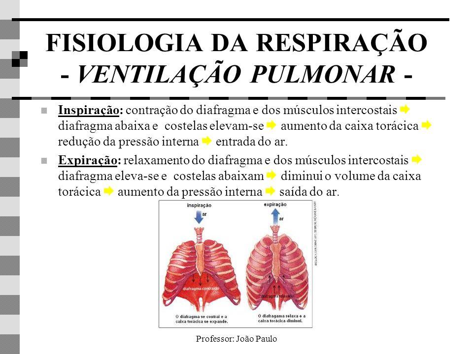 Professor: João Paulo FISIOLOGIA DA RESPIRAÇÃO - VENTILAÇÃO PULMONAR - Inspiração: contração do diafragma e dos músculos intercostais diafragma abaixa