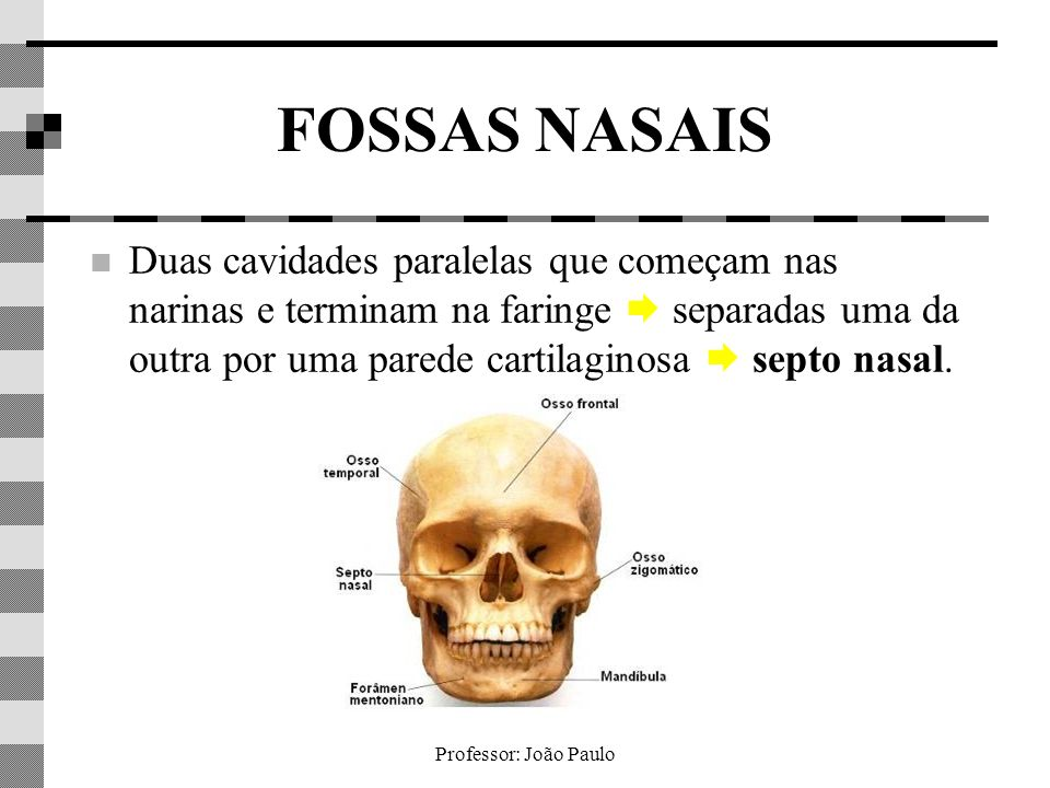 Professor: João Paulo FOSSAS NASAIS Em seu interior há dobras conchas ou cornetos nasais forçam o ar a turbilhonar.