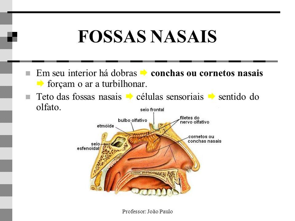 Professor: João Paulo FOSSAS NASAIS Em seu interior há dobras conchas ou cornetos nasais forçam o ar a turbilhonar. Teto das fossas nasais células sen