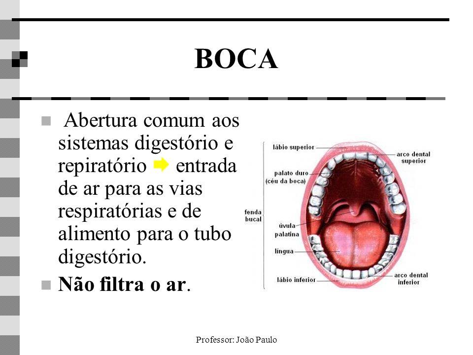 Professor: João Paulo BOCA Abertura comum aos sistemas digestório e repiratório entrada de ar para as vias respiratórias e de alimento para o tubo dig