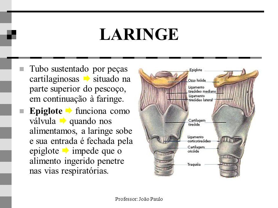 Professor: João Paulo LARINGE Tubo sustentado por peças cartilaginosas situado na parte superior do pescoço, em continuação à faringe. Epiglote funcio