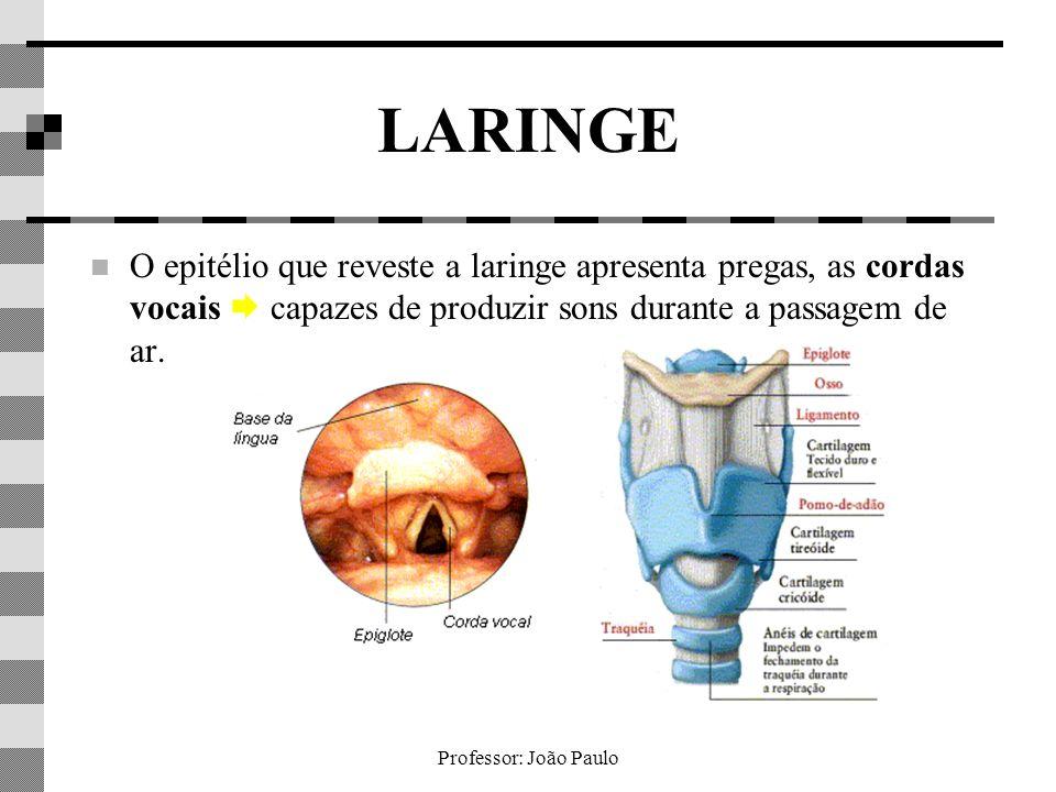 Professor: João Paulo LARINGE O epitélio que reveste a laringe apresenta pregas, as cordas vocais capazes de produzir sons durante a passagem de ar.