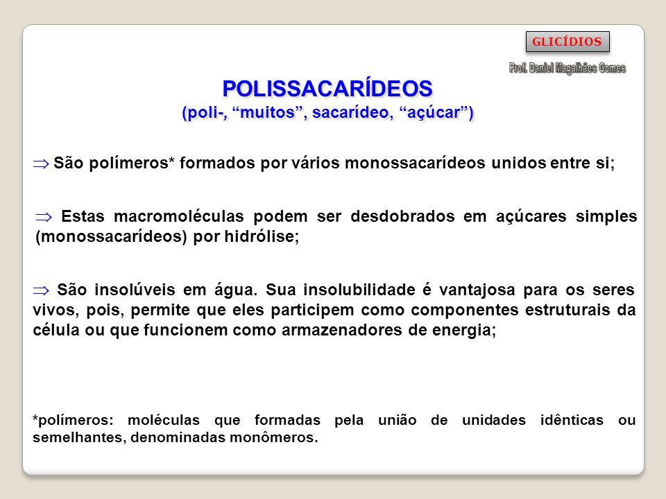 POLISSACARÍDEOS (poli-, muitos, sacarídeo, açúcar) São polímeros* formados por vários monossacarídeos unidos entre si; São insolúveis em água. Sua ins