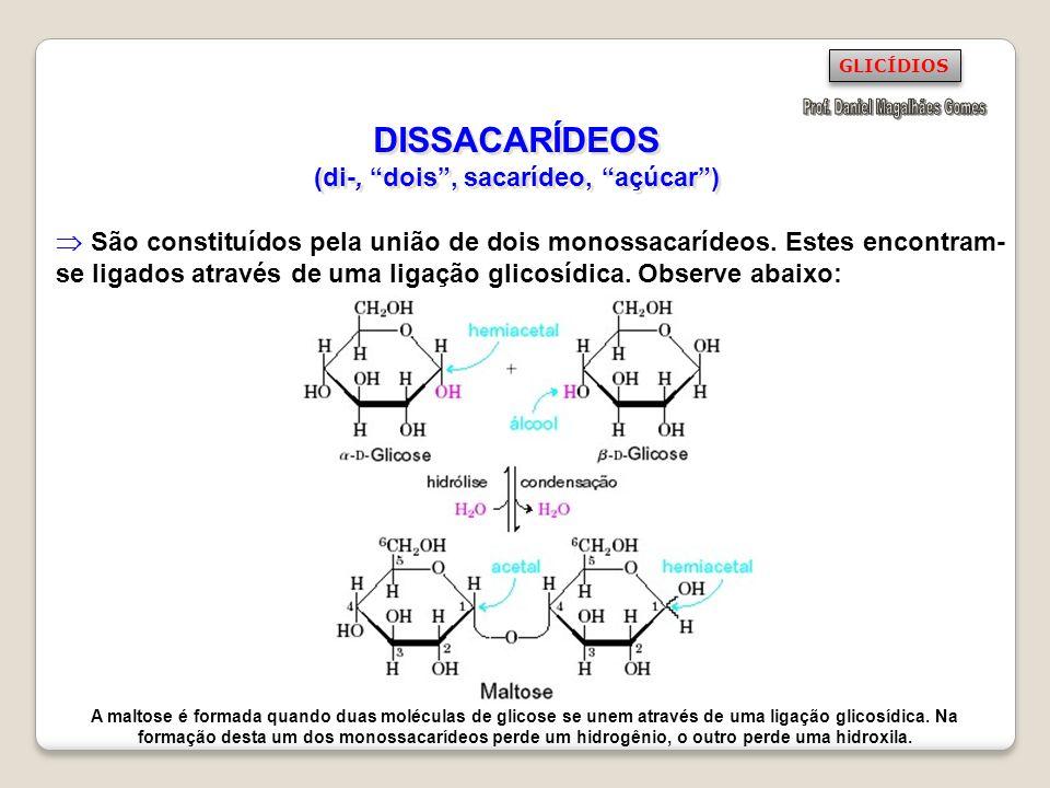 DISSACARÍDEOS (di-, dois, sacarídeo, açúcar) São constituídos pela união de dois monossacarídeos. Estes encontram- se ligados através de uma ligação g