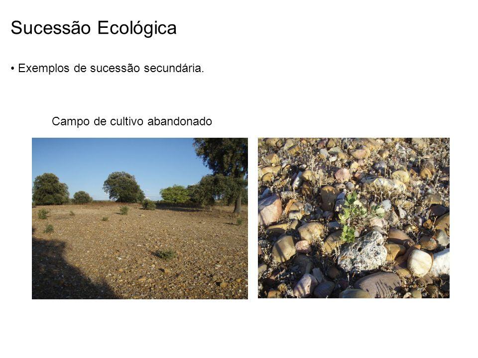Sucessão Ecológica Exemplos de sucessão secundária. Campo de cultivo abandonado