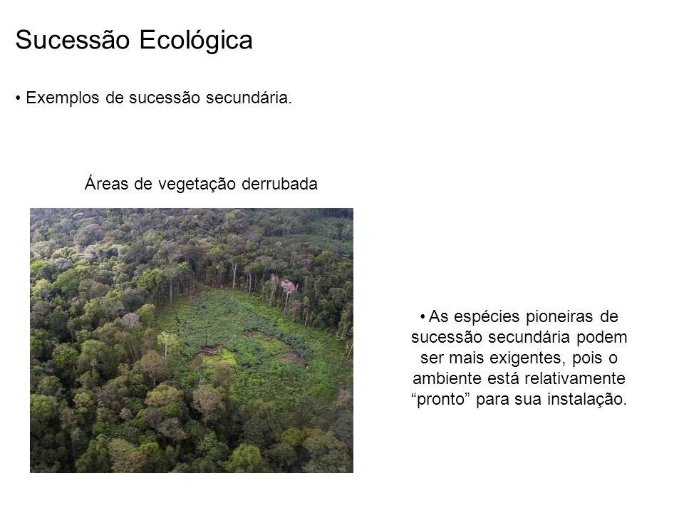 Sucessão Ecológica Exemplos de sucessão secundária. Áreas de vegetação derrubada As espécies pioneiras de sucessão secundária podem ser mais exigentes