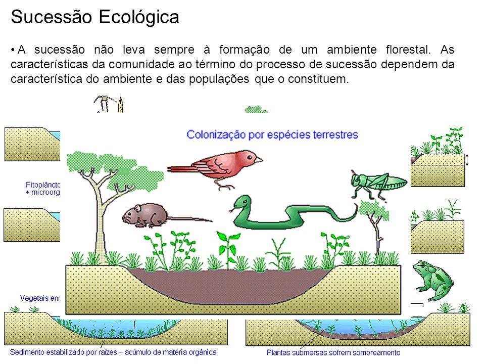 Sucessão Ecológica A sucessão não leva sempre à formação de um ambiente florestal. As características da comunidade ao término do processo de sucessão