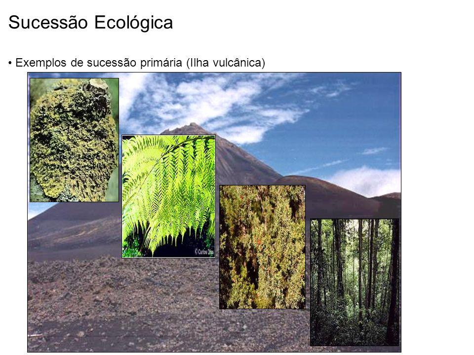 Liquens Fetos Arbustos Floresta Sucessão Ecológica Exemplos de sucessão primária (Ilha vulcânica)