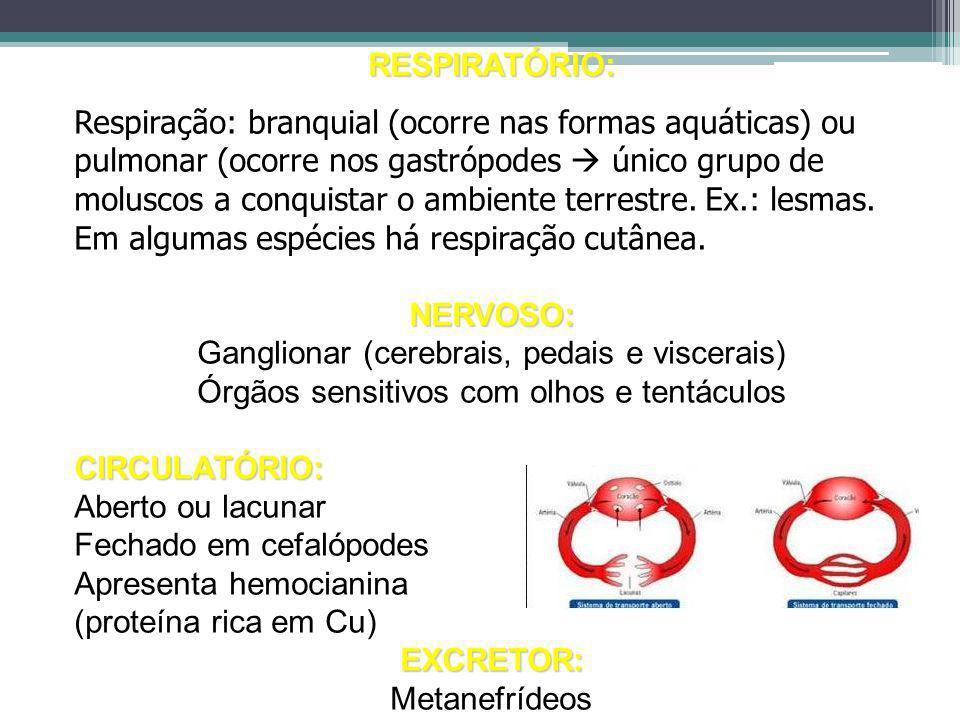 RESPIRATÓRIO: Respiração: branquial (ocorre nas formas aquáticas) ou pulmonar (ocorre nos gastrópodes único grupo de moluscos a conquistar o ambiente