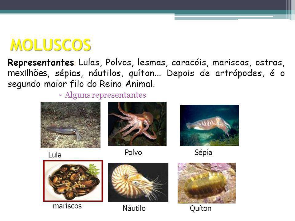 MOLUSCOS Alguns representantes Representantes : Lulas, Polvos, lesmas, caracóis, mariscos, ostras, mexilhões, sépias, náutilos, quíton... Depois de ar