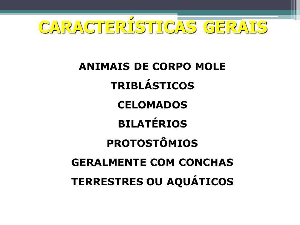 Sexos Dióico (maioria) Gastrópodes - monóicos Fecundação Interna – gastrópodos e cefalópodos Externa – Bivalves Desenvolvimento Direto – gastrópodes e cefalópodes Indireto – Bivalves