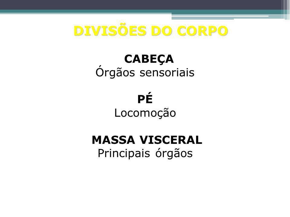 Lula colossal (uma variação da lula)