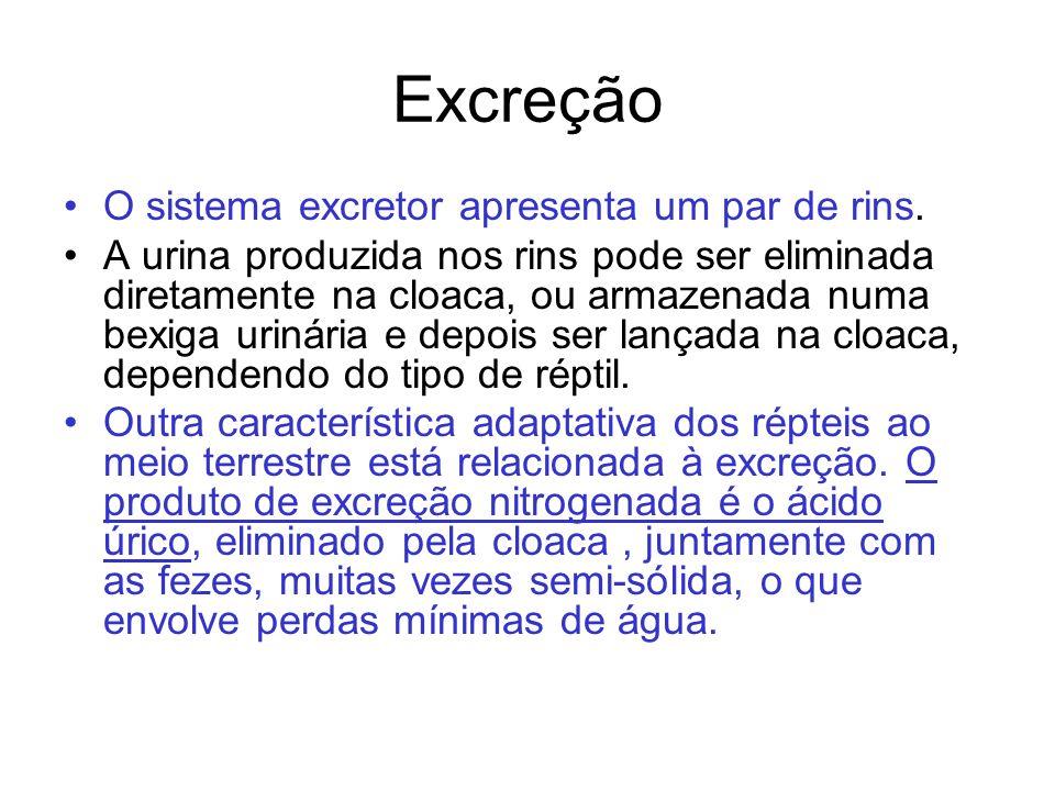 Excreção O sistema excretor apresenta um par de rins. A urina produzida nos rins pode ser eliminada diretamente na cloaca, ou armazenada numa bexiga u