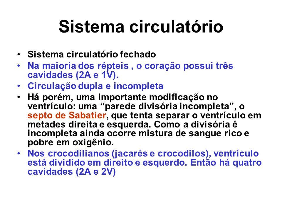Sistema circulatório Sistema circulatório fechado Na maioria dos répteis, o coração possui três cavidades (2A e 1V). Circulação dupla e incompleta Há