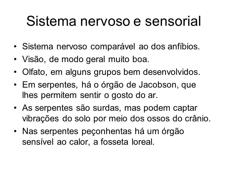 Sistema nervoso e sensorial Sistema nervoso comparável ao dos anfíbios. Visão, de modo geral muito boa. Olfato, em alguns grupos bem desenvolvidos. Em