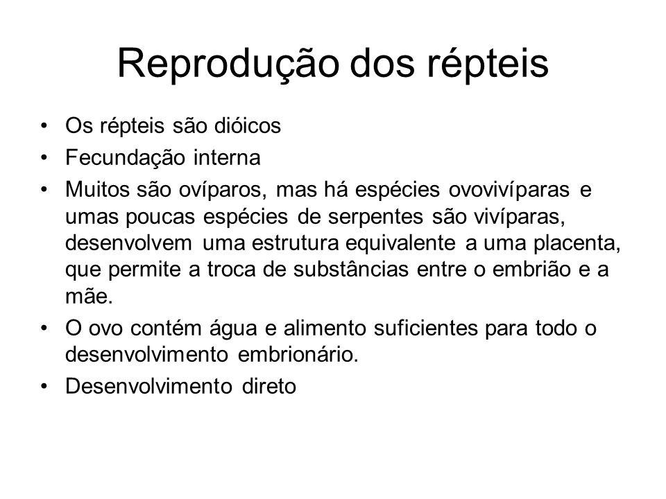 Reprodução dos répteis Os répteis são dióicos Fecundação interna Muitos são ovíparos, mas há espécies ovovivíparas e umas poucas espécies de serpentes
