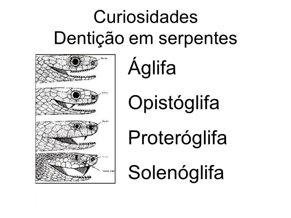 Áglifa Opistóglifa Proteróglifa Solenóglifa Curiosidades Dentição em serpentes
