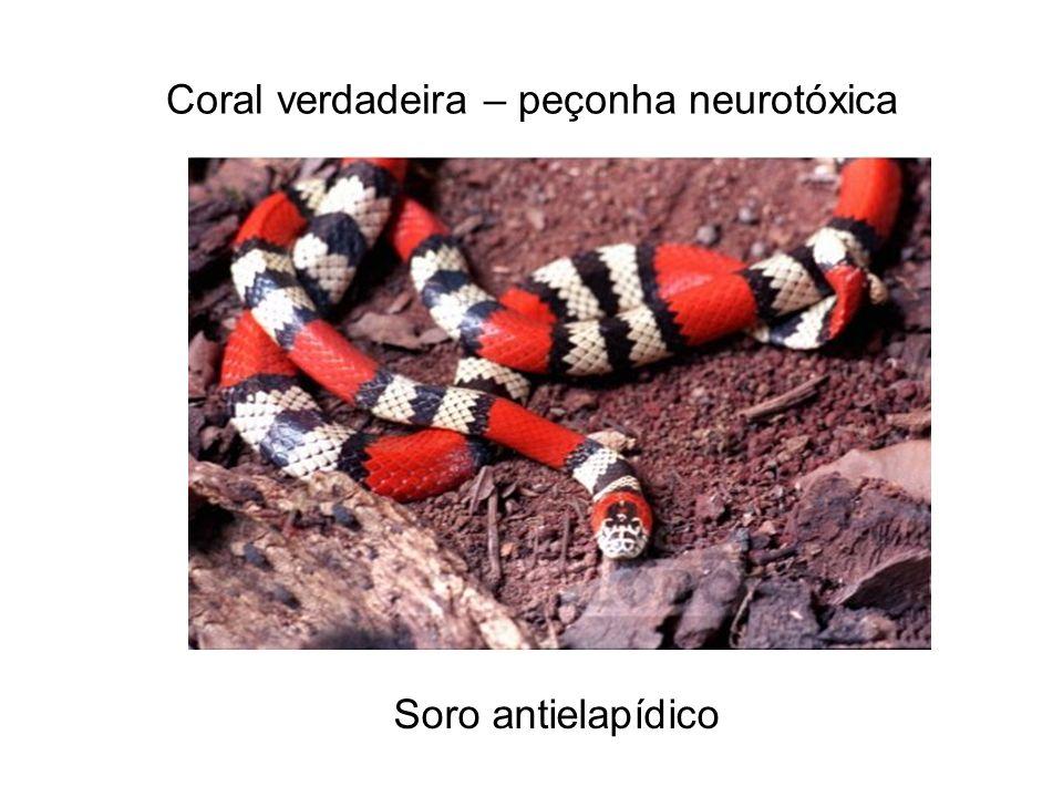 Coral verdadeira – peçonha neurotóxica Soro antielapídico
