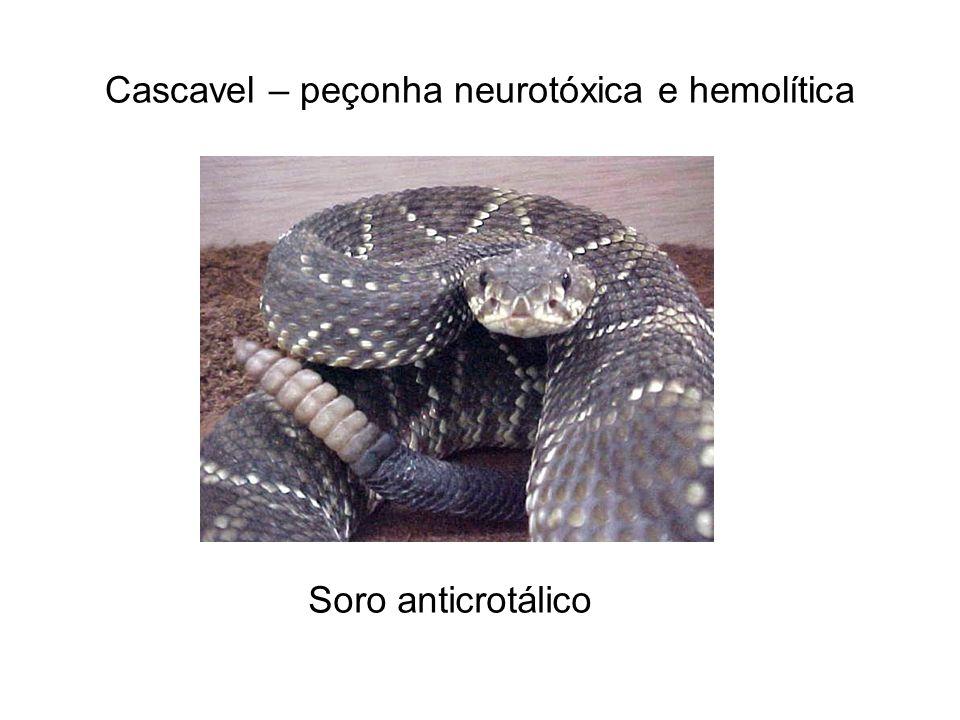 Cascavel – peçonha neurotóxica e hemolítica Soro anticrotálico