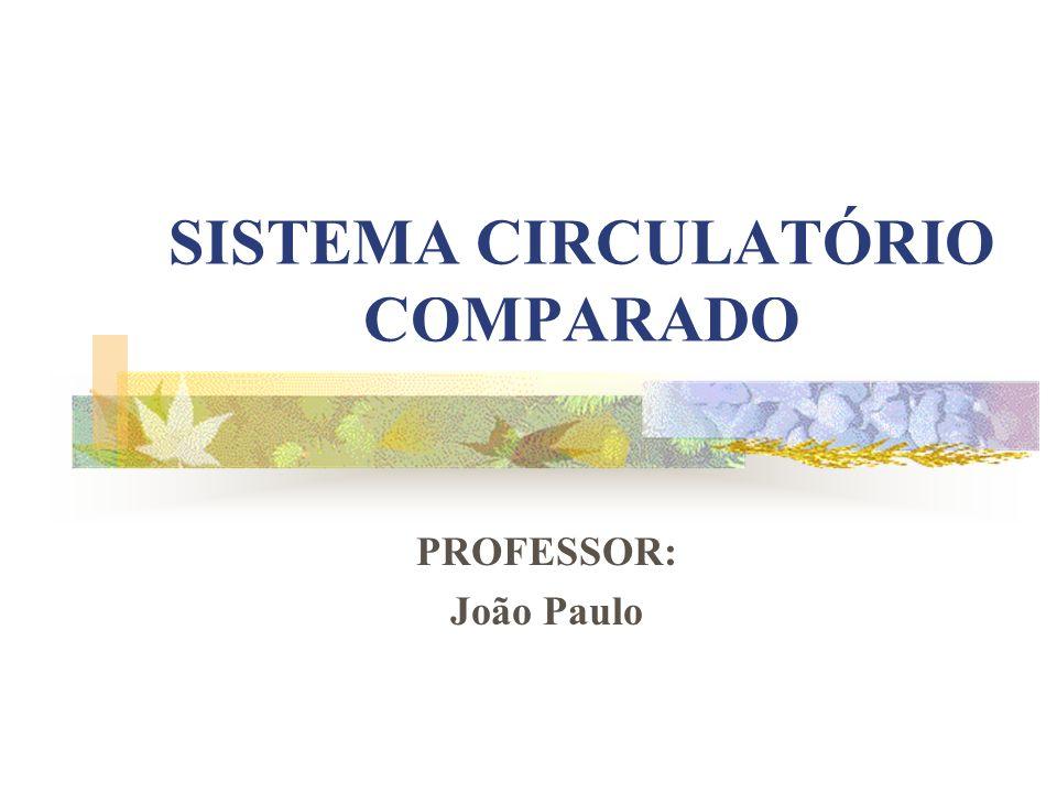Professor: João Paulo O sistema circulatório fechado bem desenvolvido, por onde circula o sangue que possui a hemoglobina como pigmento respiratório.