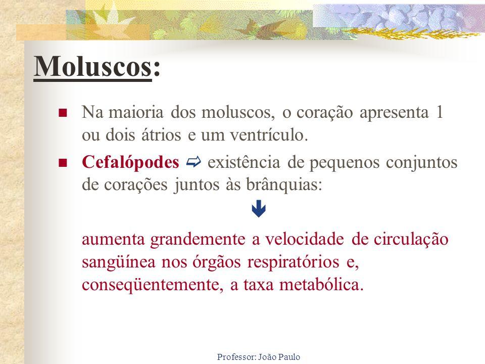 Professor: João Paulo Na maioria dos moluscos, o coração apresenta 1 ou dois átrios e um ventrículo. Cefalópodes existência de pequenos conjuntos de c
