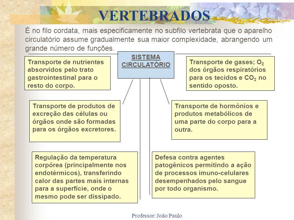 Professor: João Paulo SISTEMA CIRCULATÓRIO Transporte de nutrientes absorvidos pelo trato gastrointestinal para o resto do corpo. Transporte de gases;