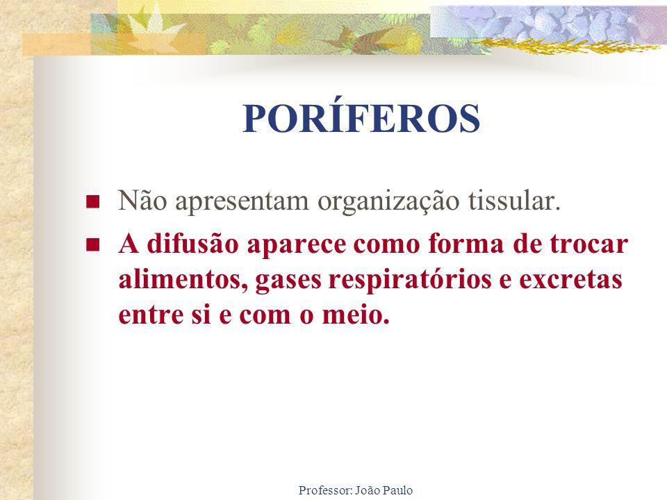 Professor: João Paulo PORÍFEROS Não apresentam organização tissular. A difusão aparece como forma de trocar alimentos, gases respiratórios e excretas