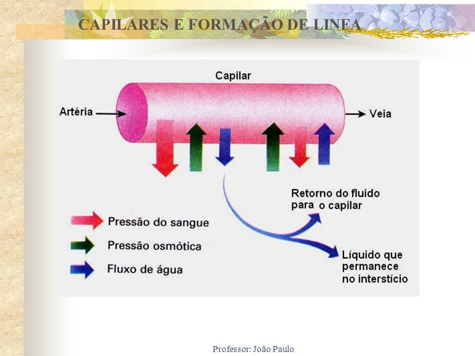 Professor: João Paulo CAPILARES E FORMAÇÃO DE LINFA