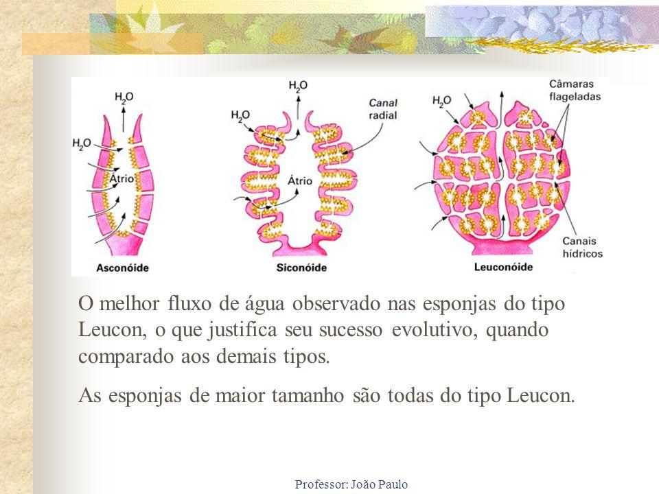 Professor: João Paulo O melhor fluxo de água observado nas esponjas do tipo Leucon, o que justifica seu sucesso evolutivo, quando comparado aos demais