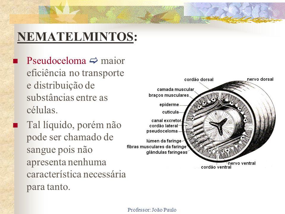 Professor: João Paulo NEMATELMINTOS: Pseudoceloma maior eficiência no transporte e distribuição de substâncias entre as células. Tal líquido, porém nã