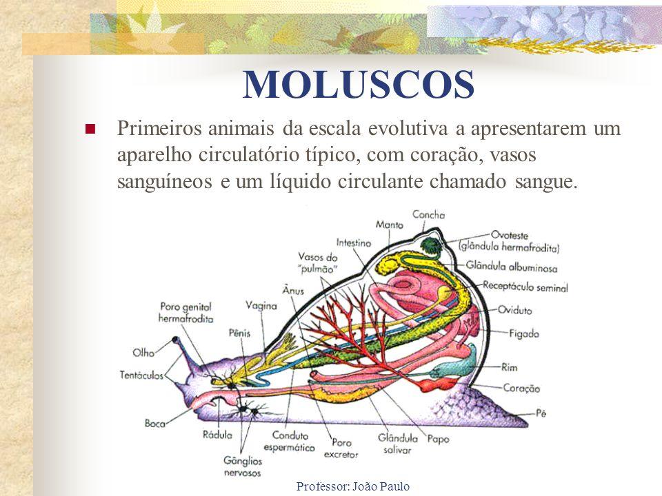 Professor: João Paulo MOLUSCOS Primeiros animais da escala evolutiva a apresentarem um aparelho circulatório típico, com coração, vasos sanguíneos e u